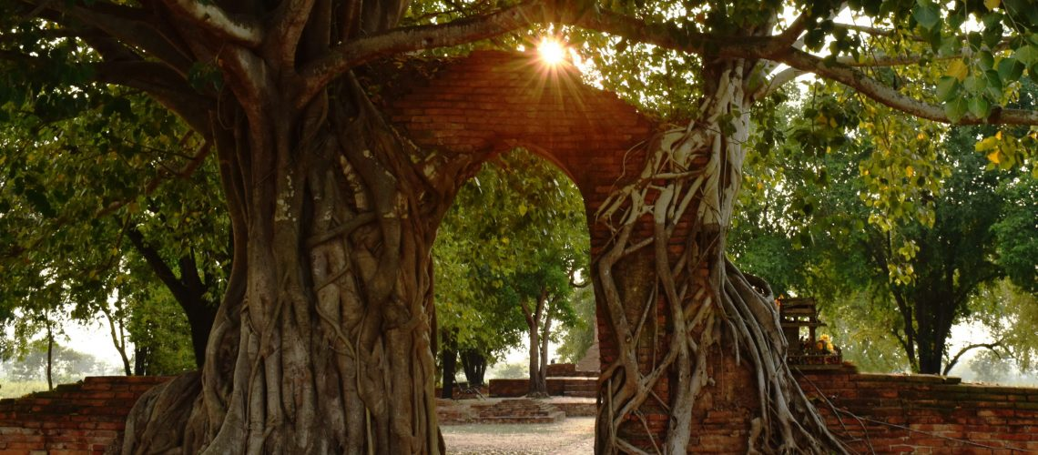 sunlight spreading on ruin door cover by Bodhi tree at Phra Nakhom ancient Buddhist temple Thailand